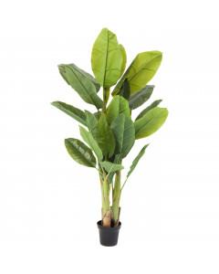 Kare Deco Plant  Banana Tree 180 cm