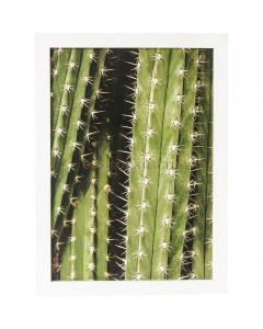 Kare Wandfoto Cactus 45x33cm