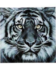 Kare Wandfoto Glas Face Tiger 80x80 cm