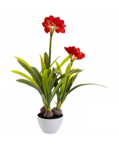 Kare Deco Plant Amaryllis Red