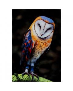 Kare Wandfoto Glass Owl 120x80