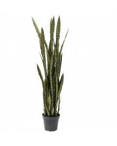 Kare Deco Plant Sansewieria 155cm