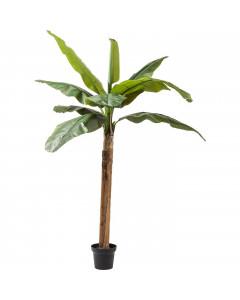 Kare Deco Plant  Banana Tree 190 cm