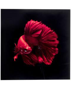 Kare Wandfoto Glass Fire Fish